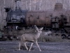 CTSRR-WPD3795-Chama-deer