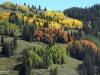 Aspen-04-yellow-red