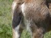 Deer rump